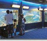 Img 1: Städtisches Aquarium von Santa Pola
