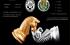 Torneo ajedrez Castalla