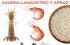 X Jornadas Gastronómicas del Arroz, la Galera y Langostino - Peñíscola