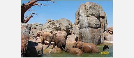 Images d'animaux dans le Bioparc Valencia