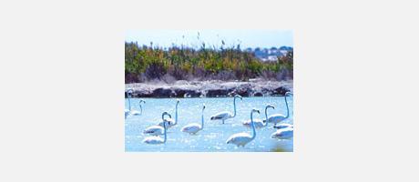 Img 1: Parc Naturel des Marais Salants de Santa Pola