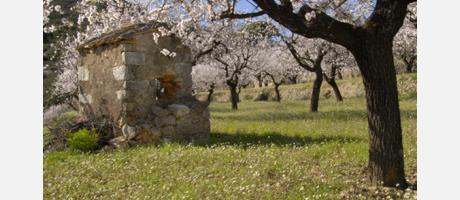 Img 1: Ruta los almendros en flor en Alcalalí