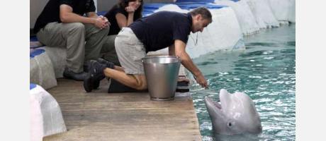 Dando de comer a los delfines