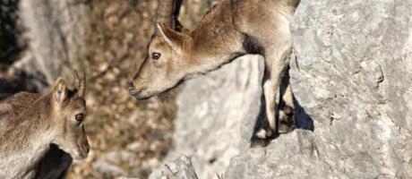 Avistamiento de fauna en el Maestrat con Animaestrat