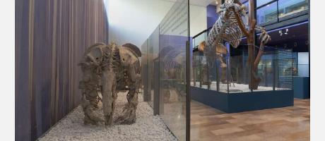 Museo de Ciencias Naturales (Museo Paleontológico) de Valencia