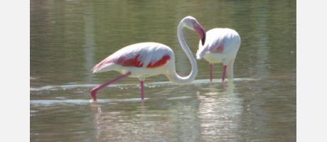 Calp_Turismo_ornitológico_Img3