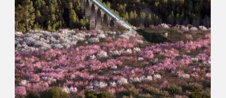 Almendros en flor Alcoy