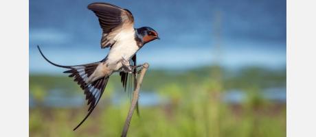 Birdwatching en el Parque Natural del Hondo en Elche