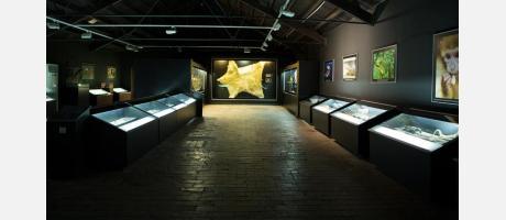 Museo de la Biodivesidad ( interior )