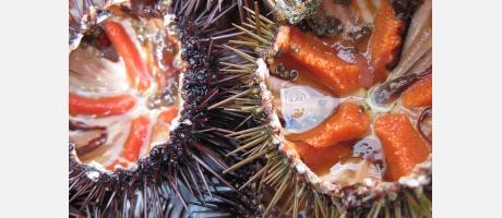 Tapa de erizos de mar