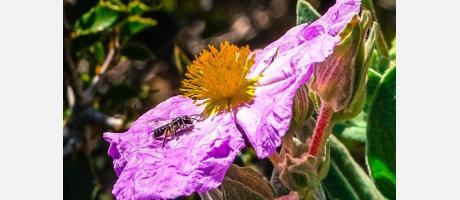 Flores de la Comunitat Valenciana