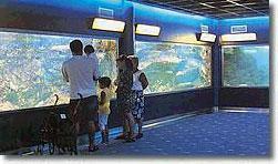 Img 1: Aquarium Municipal de Santa Pola