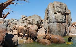 Bilder von Tieren in der Bioparc Valencia