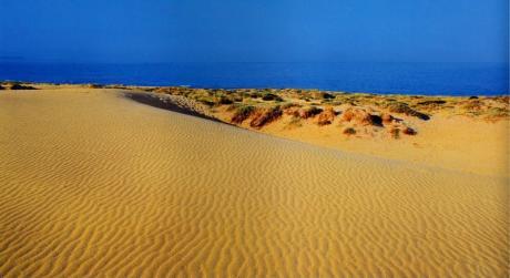 Elx dunas