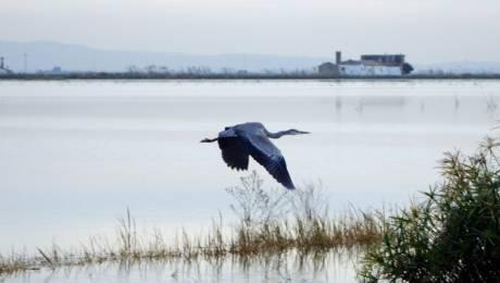 Observación de aves en la Comunitat Valenciana - Albufera de Valencia