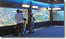 Städtisches Aquarium von Santa Pola