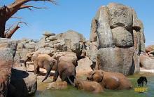 Der Bioparc Valencia, ein platz für Tiere