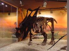 Museu Paleontològic d'Elx (MUPE) (Paleontological Museum)