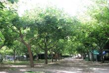 Famille et bon environnement en Camping Les Cloticos à Bejís