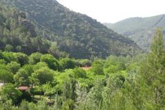 Bejis_Camping_Los_Cloticos_Img6