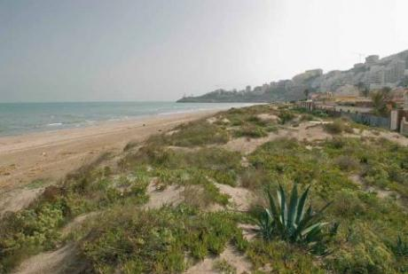 Dossel Beach
