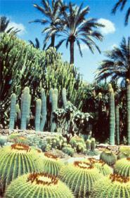 Huerto del Cura (incluido en el Conjunto del Palmeral, Patrimonio de la Humanidad)