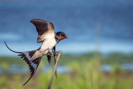 Birdwatching en el PN del Hondo en Elche (Alicante)