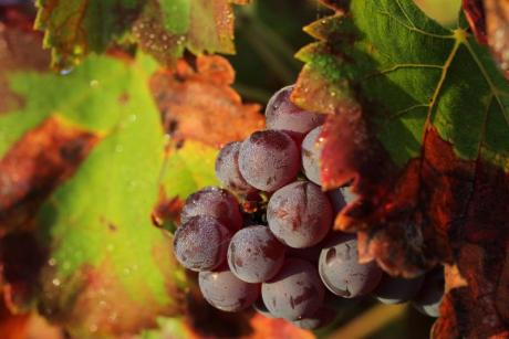 Discover the Landscape: A walk among Vineyards in xaló