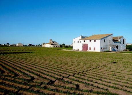 La chufa y otros superalimentos cultivados en L'Horta valenciana