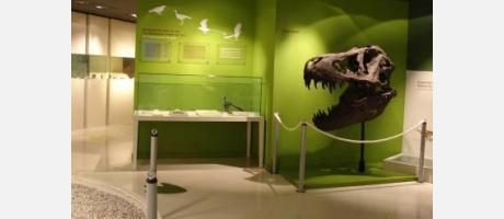 dinosaurios en la Comunitat Valenciana 4